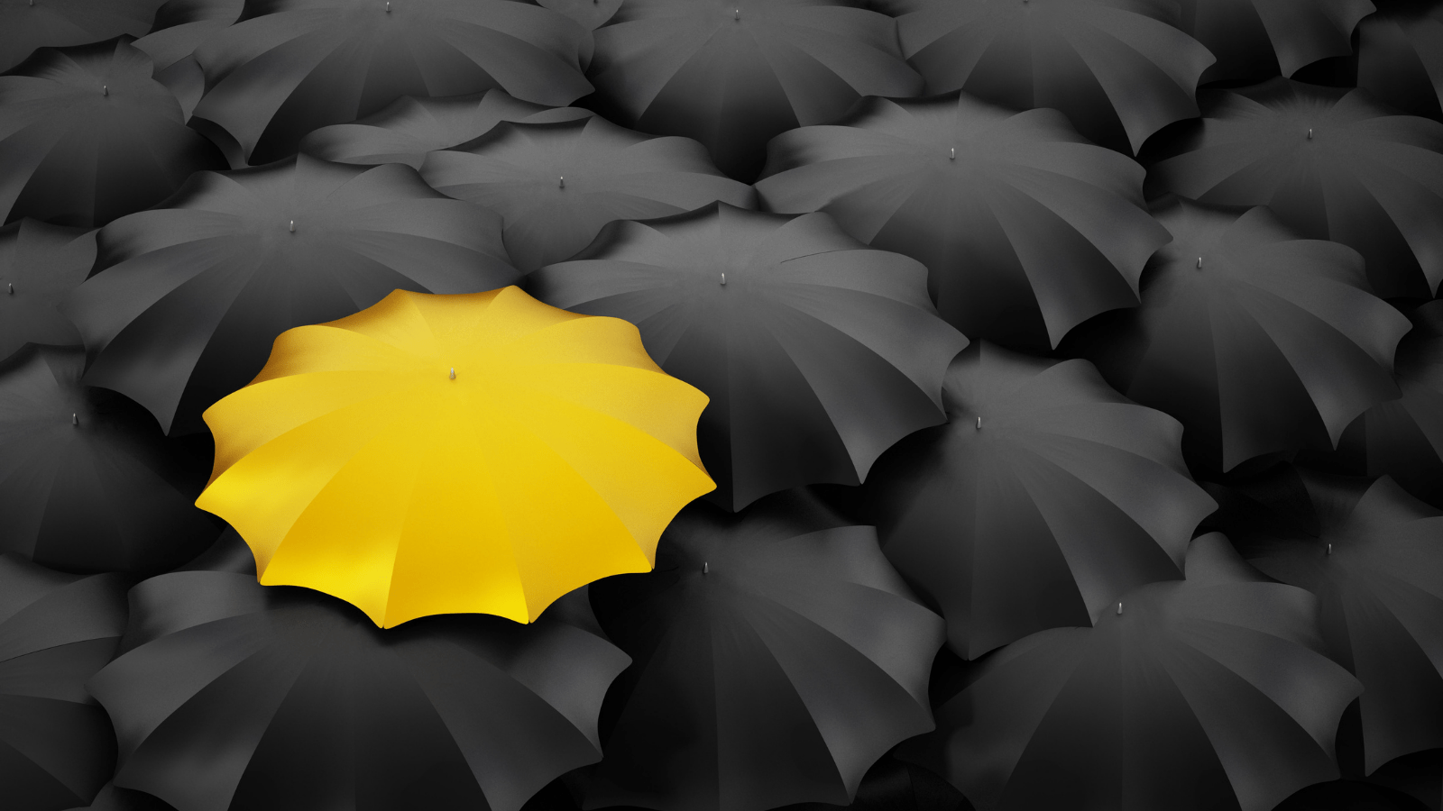 One bright yellow umbrella among a sea of black umbrellas.